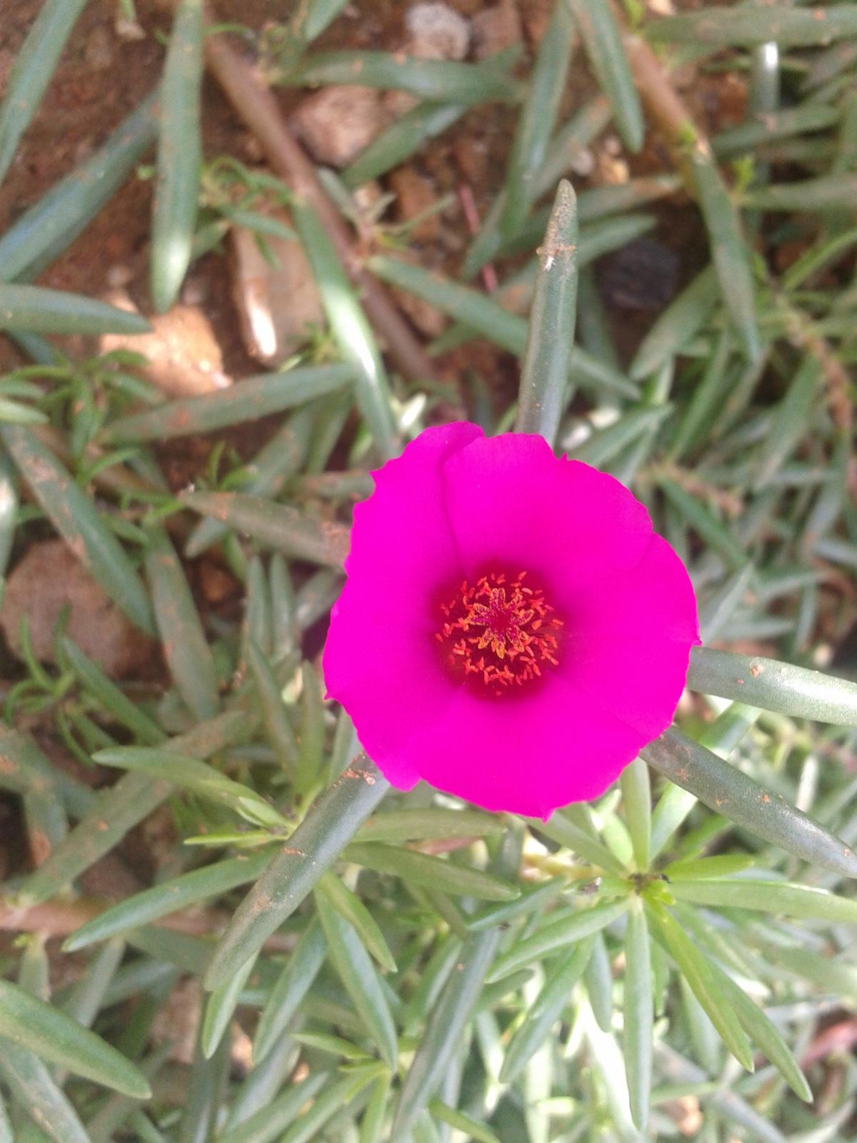 flores para jardim o ano inteiroPlantas Que Atraem Beija Flores E