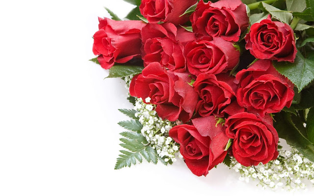 Beautiful Red Roses Flowers Collections 21