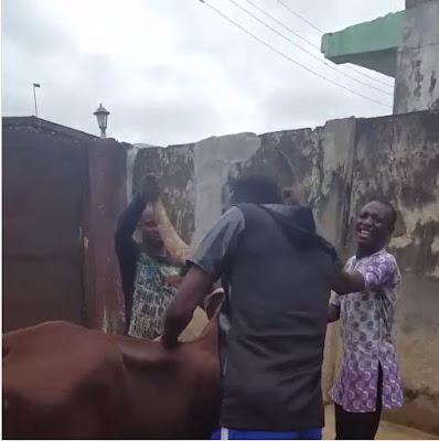 Comedian Akpororo riding his cow to Warri,Akpororo on a cow,Akpororo rides a cow,Akpororo and cow 4