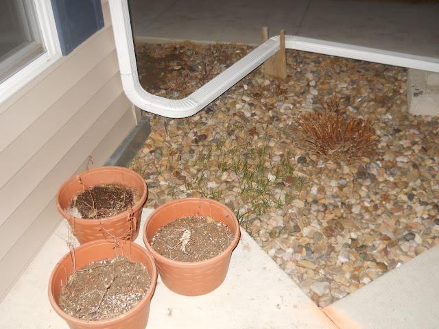 My Garden #2