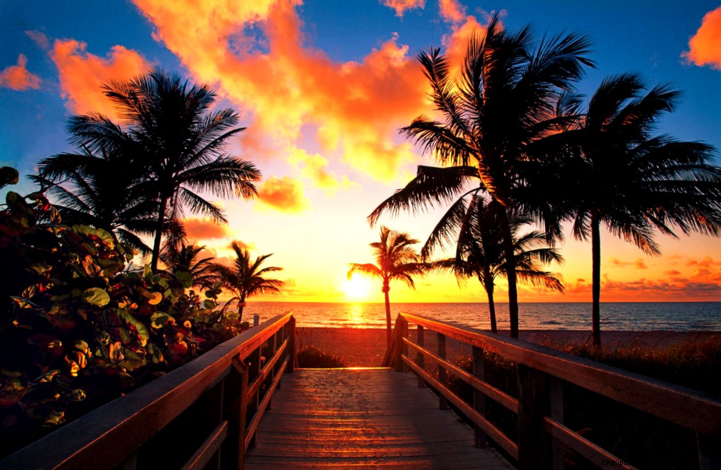 Tropical Sunrise Wallpaper  Vorrei essere qui  Pinterest