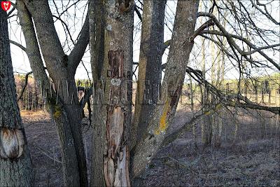 Дерево у входа в №123