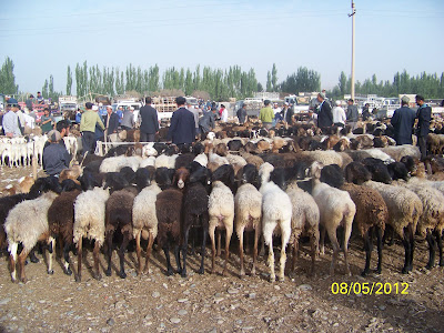 le coin des moutons