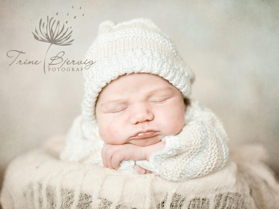 Nyfødtfotografering av fotograf Trine Bjervig i Tønsberg, vestfold