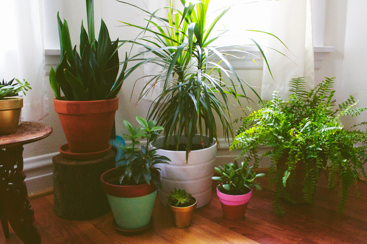 Plant Grow Bringing Outdoor Plants on outside bringing plants inside winter