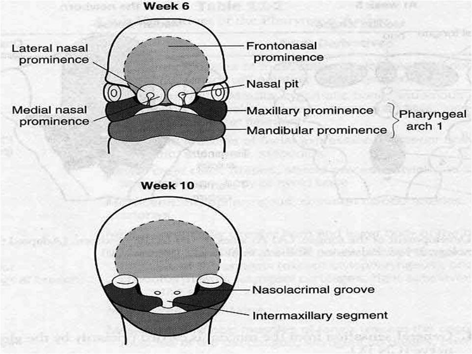 MBBS Medicine (Humanity First): Cleft lip and cleft palate