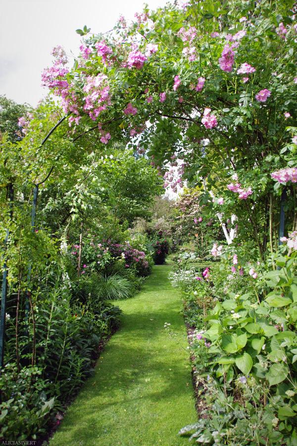 aliciasivert, alicia sivertsson, Les Jardins d'Angelique, normandie, normandy, france, frankrike, trädgård, trädgårdar, garden, gardens, rose, roses, flowers, gardening, flower, blommor, trädgårdskonst, växtlighet, rosor, spaljé