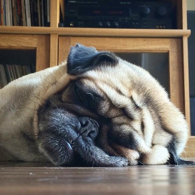 perros adorables en instagram