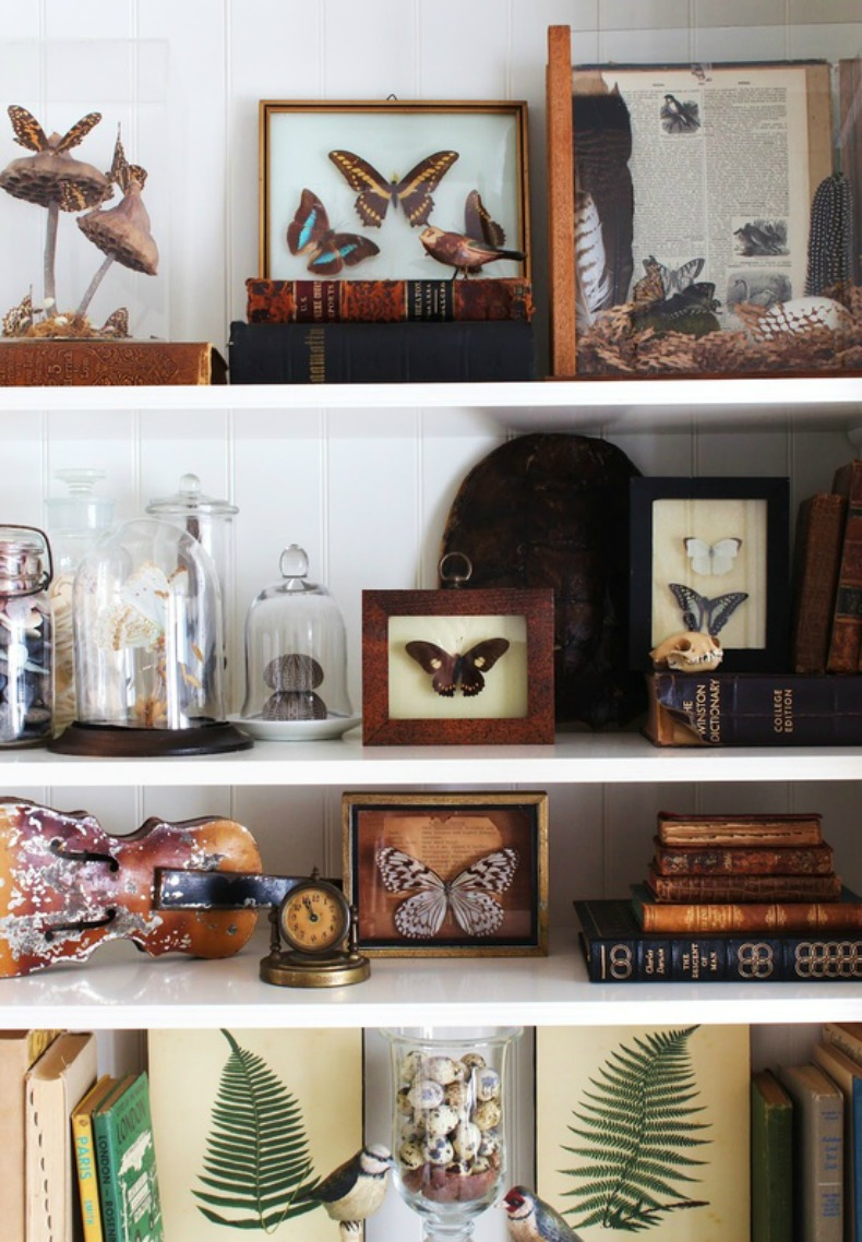 Beautiful butterfly collection displayed on bookcase