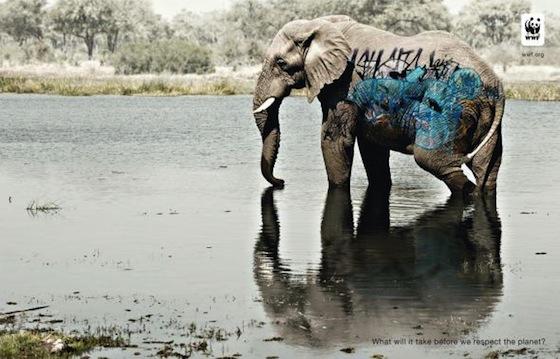 Respect for animals in the planet