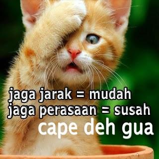 DP BBM kata kucing lucu