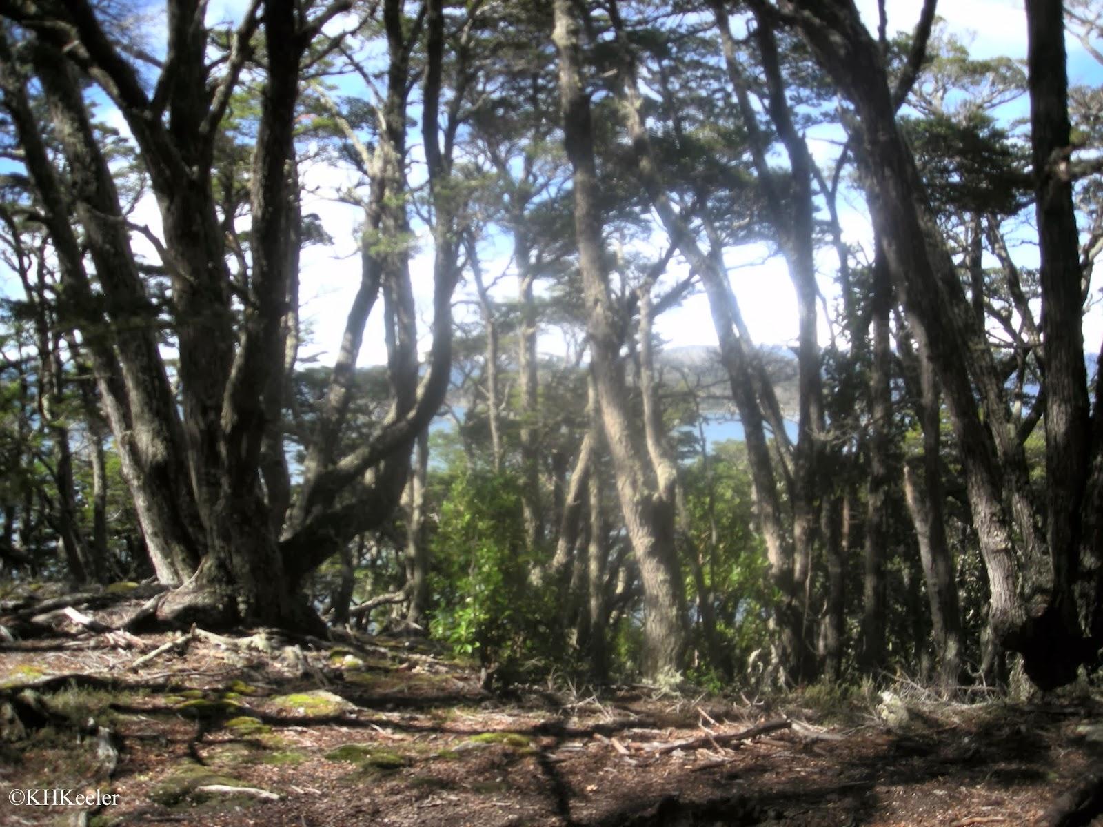forest, Tierra del Fuego