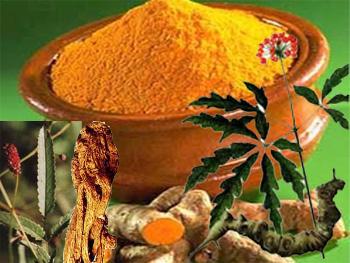 Bài thuốc chữa bệnh trĩ của người H'Mông