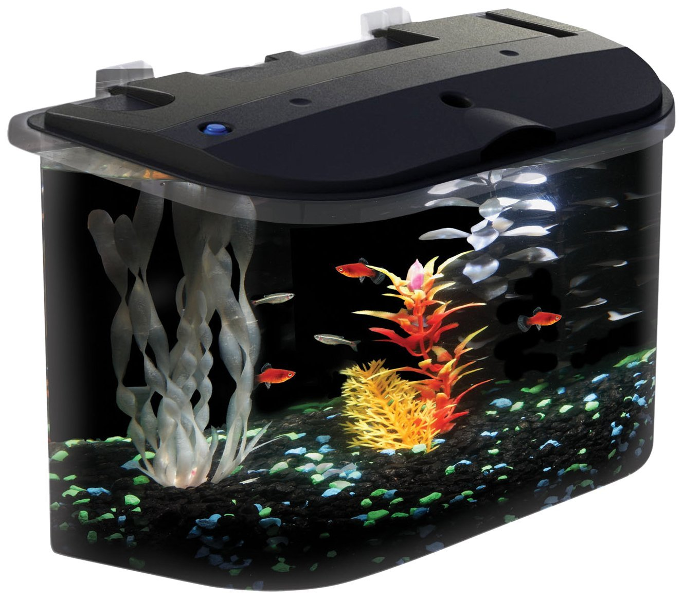 aquarius aq15005 aquarius 5 rounded 5 gallon aquarium kit