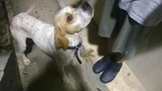 Βρέθηκε σκυλάκι στην περιοχή 40 εκκλησιών (Β ΦΕΘ), Θεσσαλονίκη. Φαίνεται ταλαιπωρημένος, και μπορεί να έχει μέρες που χάθηκε