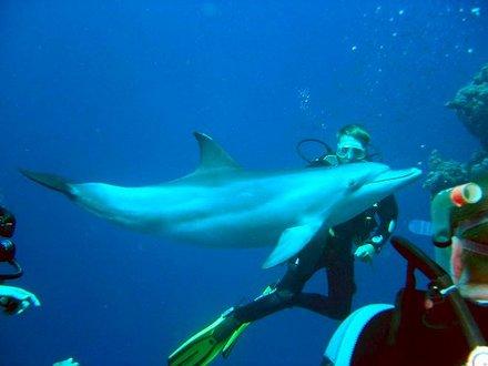 mergulho com golfinhos