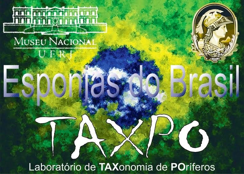 Esponjas do Brasil