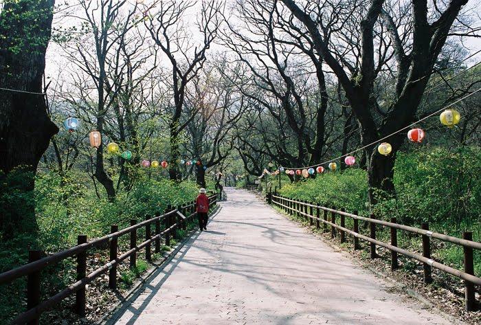 Tempat Wisata di Korea Selatan  Korean Wave