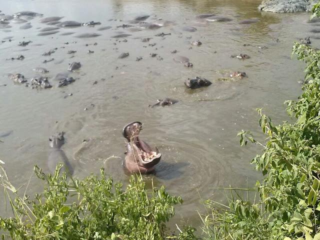 Retima Hippo Pool Serengeti HSKL Safaris
