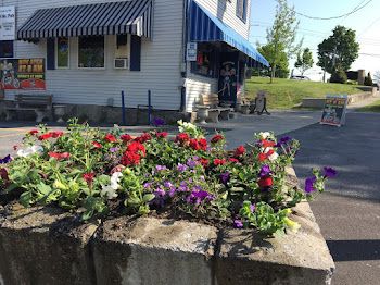 Seaway Gardens Plants Posies on Pearl