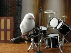 passarinho tocando guitarra e bateria