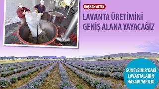 Başkan Altay: Lavanta Üretimini Geniş Alana Yayacağız