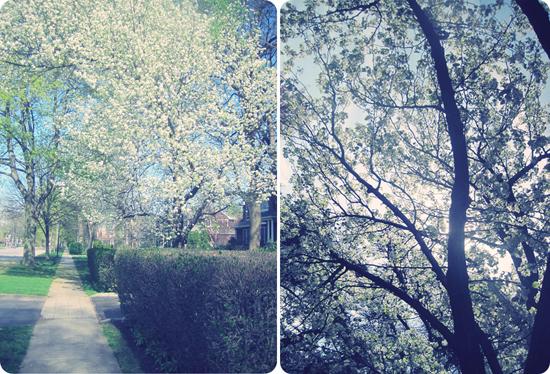 cartoon trees and flowers. like cartoon trees or