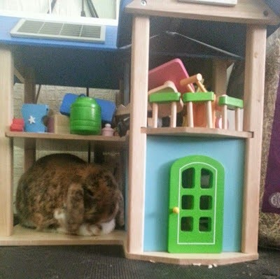 Barny Bear's Little Adventure - Rabbit hiding in Wonderworld Eco-House
