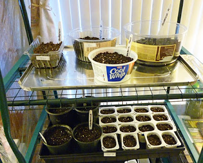 indoor seed starting