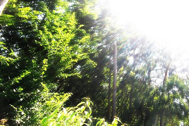 Sommersonne Kaleidoskop