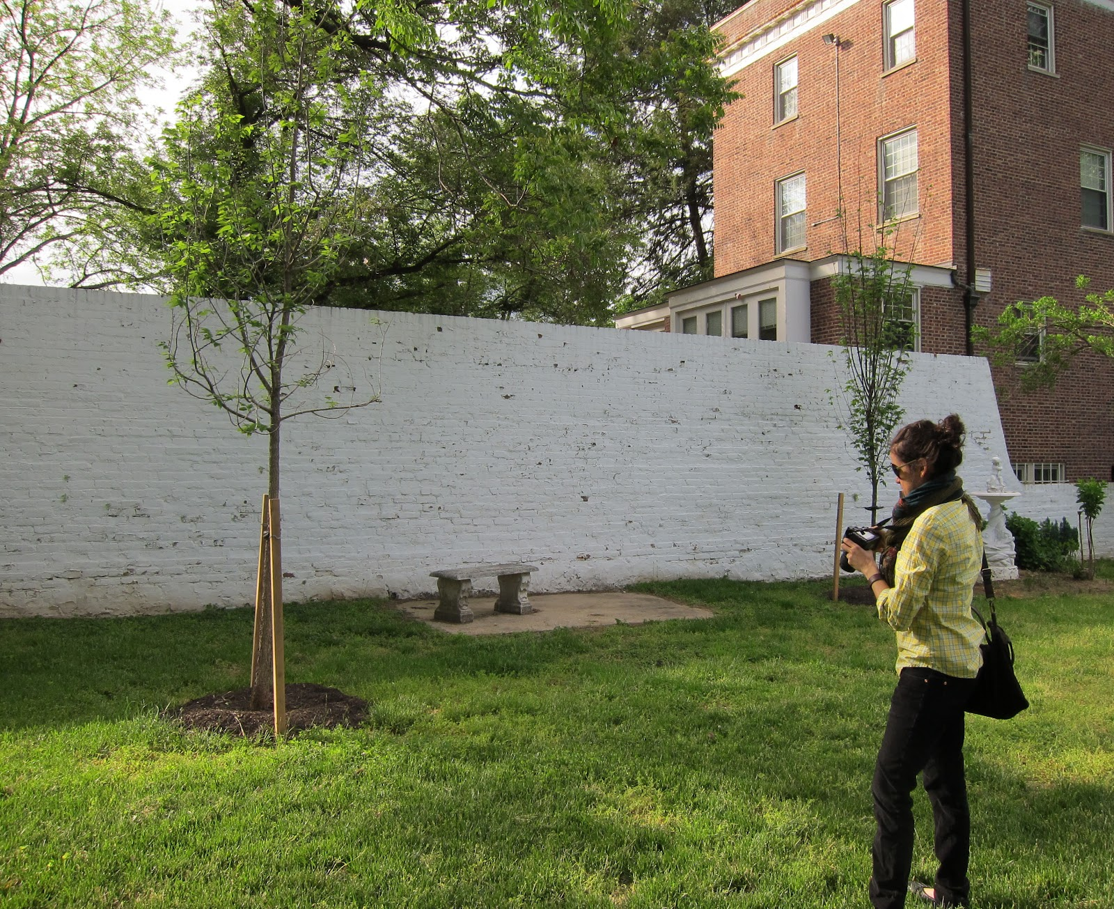 Planting Under Elm Trees : Below the embassy s clara rodriquez and a new chinese lacebark elm