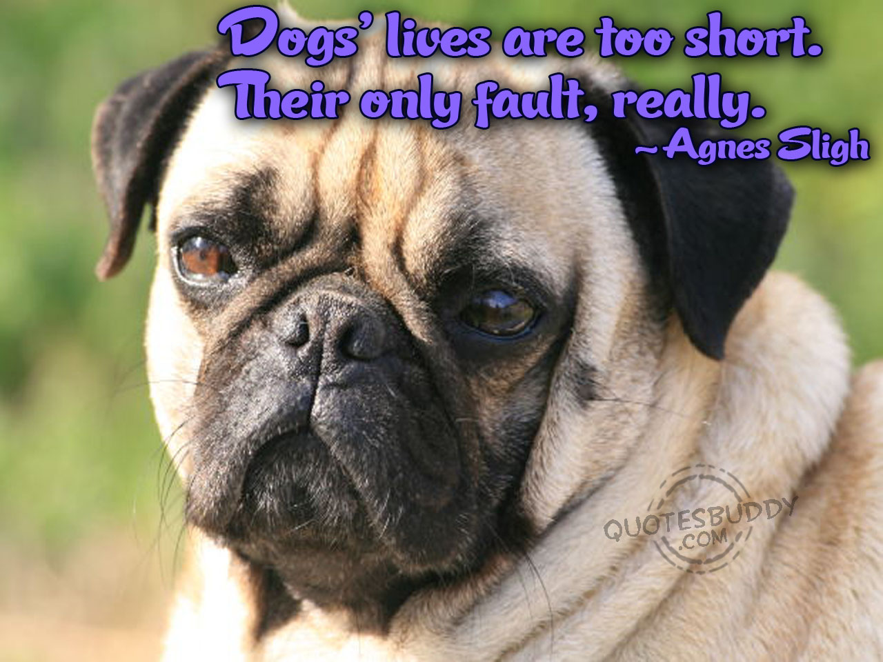 Funny Dog Quotes and Sayings