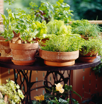 Tips To Make Your Garden More Beautiful