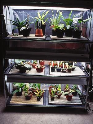 Las orqu deas de iv n arroyo my orchids in basque country for Viveros caseros