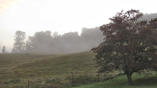farm hill foggy morning