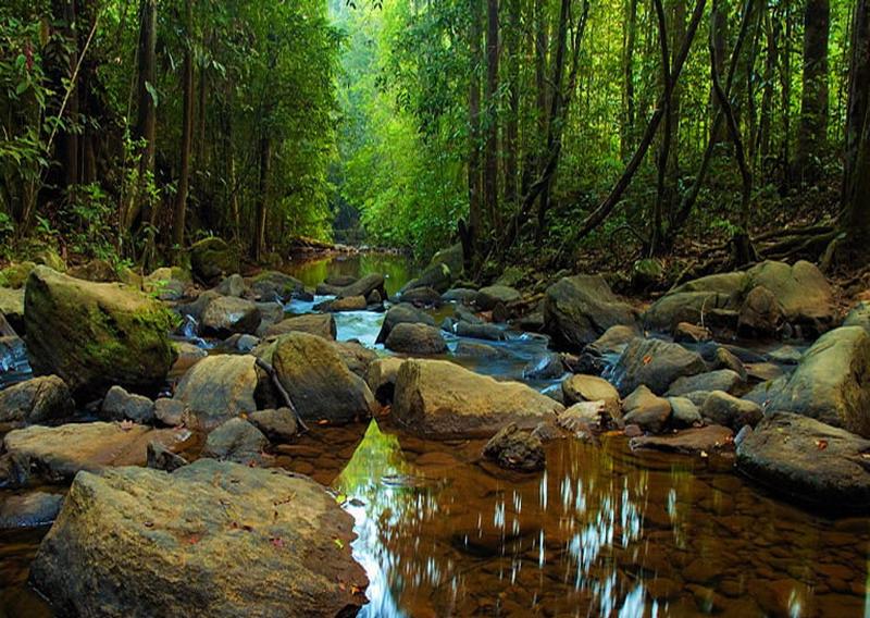 Sinharaja Sri Lanka  City new picture : sinharaja forest reserve sri lanka sinharaja forest reserve sri lanka ...