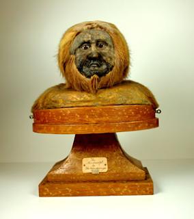 ape-man specimen