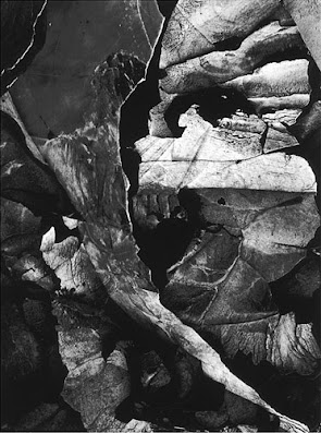 masters of photography : Minor White : photo of layers like face