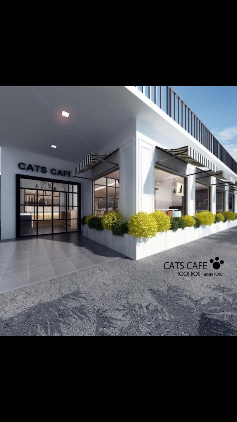 Cats Cafe @ Johor Bahru