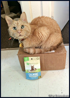 Carmine sits on a box in the kitchen with a bag of Pet Naturals of Vermont Calming Cat Chews.