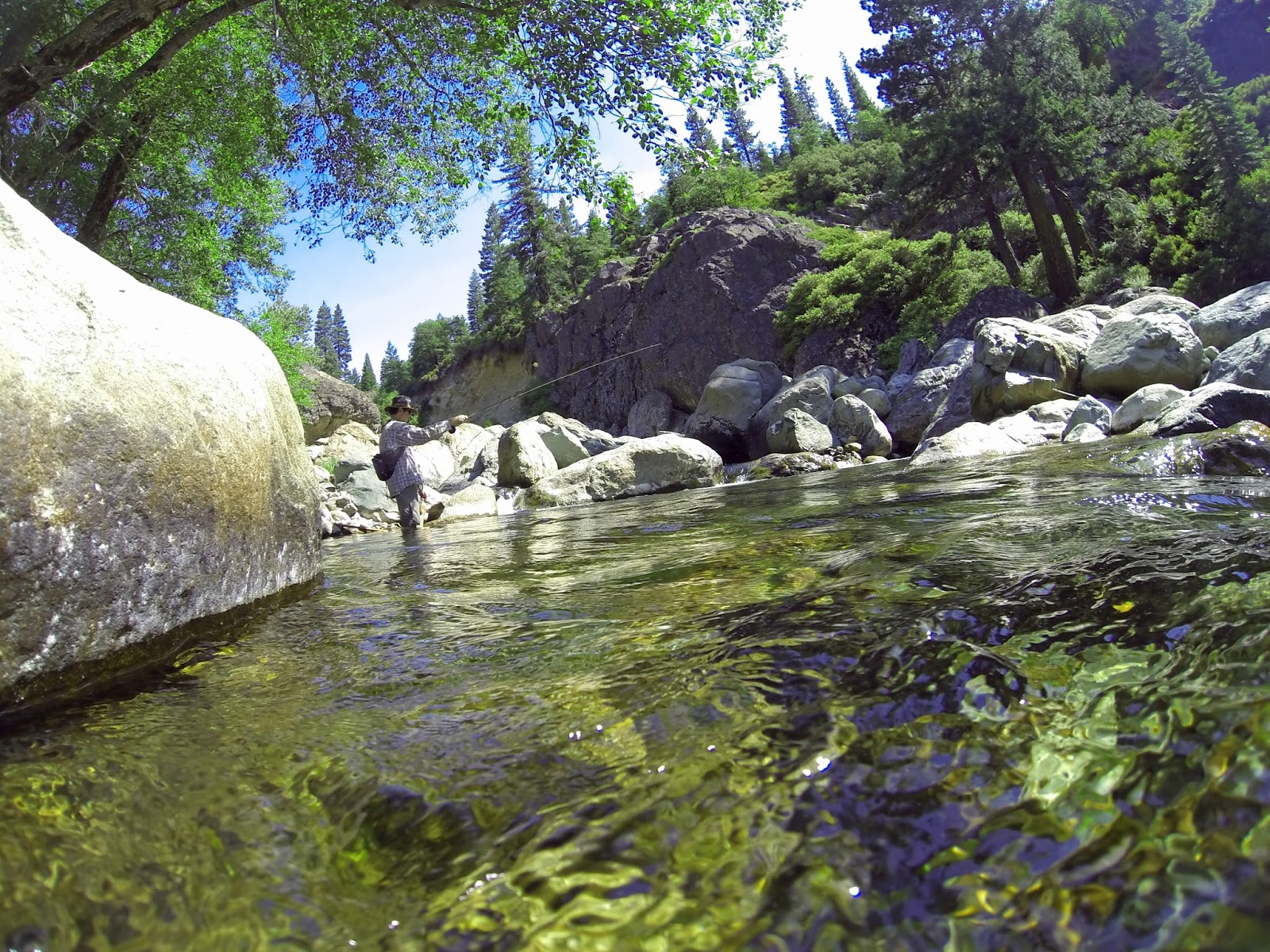 Jon baiocchi fly fishing news north fork yuba river for Lewis river fishing report