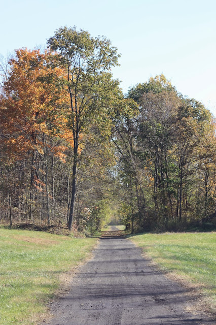 country road sheltered by fall trees