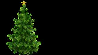 Arvore de Natal com Estrela png