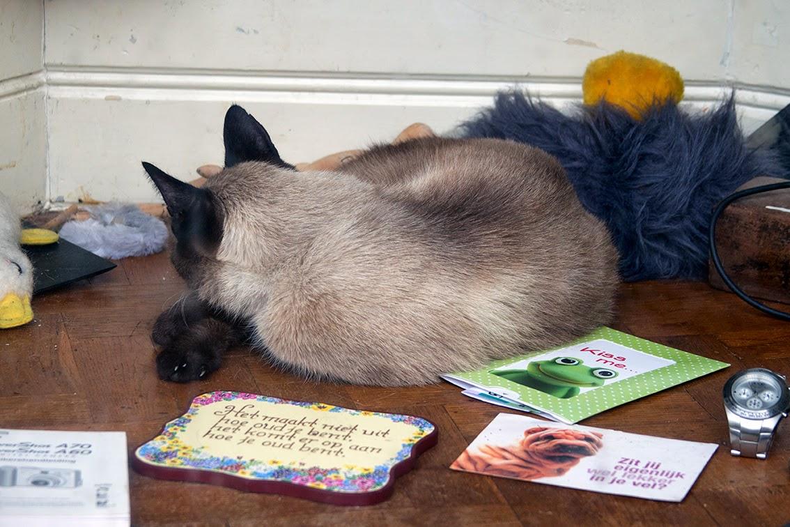cat sleeping in shop window