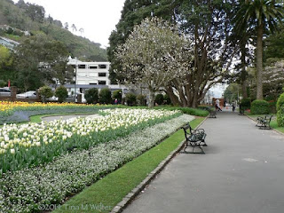 Lower entrance, Wellington Botanic garden. photo ©2014 Tina M.Welter  Springtime