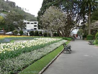 Lower entrance, Wellington Botanic garden. photo ©2014 Tina M.Welter  Springtime