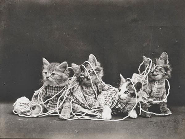 Смешные кошки столетие назад
