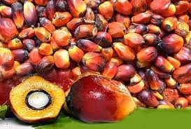MCX crude palm oil, agri commdity tips, free agri calls, Futures Trading Tips