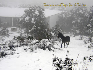 Platón en la nieve