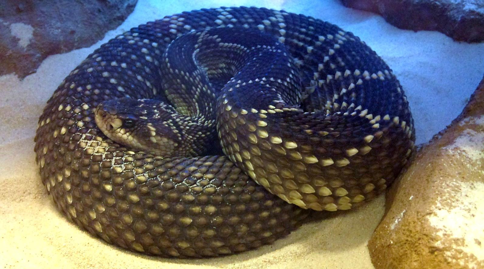 serpientes venenosas septiembre 2011